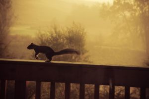 Squirrel in the morning by Balopp