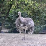Ostrich by Roky320