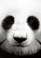 panda for graphic class by daerac