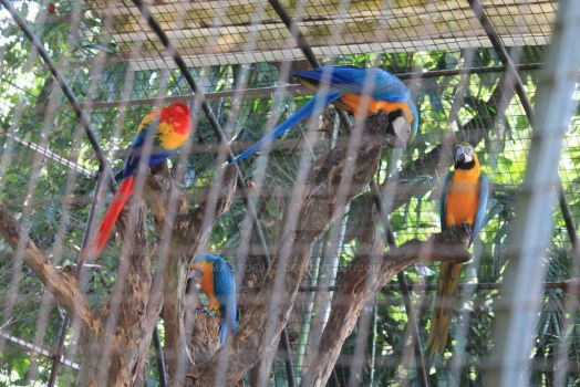 Group of Parrots by mailtoejas