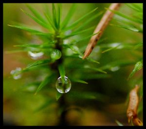 drop on moss by linedal