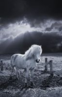 Cheval by Flore-stock