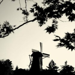 .:in search of the wind:. by neslihans