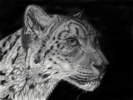 Snowleopard by Sarahharas07