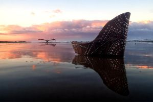 The Whore and the Whale by ahermin
