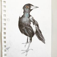 Malicious Magpie by EmilyApril