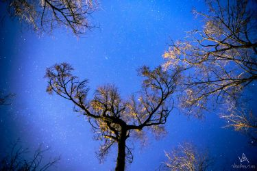 Tree many stars by VitoDesArts