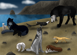 RoK: Cats, Dogs, Oh My by kagetora4ever