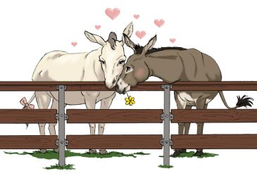 Donkey Love by artofMilica