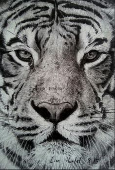 Tiger portrait by BeckyKidus