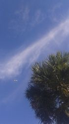 Plane And Palm Tree by raysona