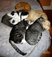 cat pile by Incongruent