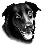 Dog drawing second attempt by ProfessorPicasso