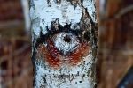 Eye of Nature by stofo