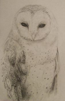 Barn owl sketch by HenchGoose