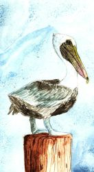 Pelican Watercolor by Blackwolfoffireworks