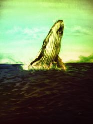 Ballena Corcovada by Angelotti37