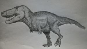 Tyrannosaurus by NordicB3rry