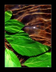 A Tale of Six Leaves... by KevinStephens