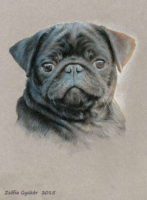 BJP Eben (female pug puppy) by ZsofiaGyuker