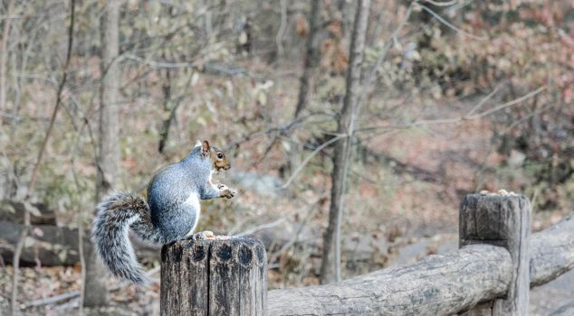 Squirrel and His Food by mnjul