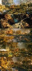 Fall arrives by sanfranguy