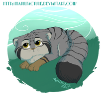 Manul by Manulfacture