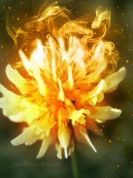 Smouldering passion by Floreina-Photography