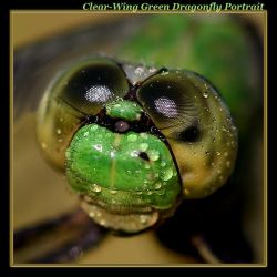 Clearwing Green Portait by boron