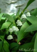 Lily of the Valley by jewels4665