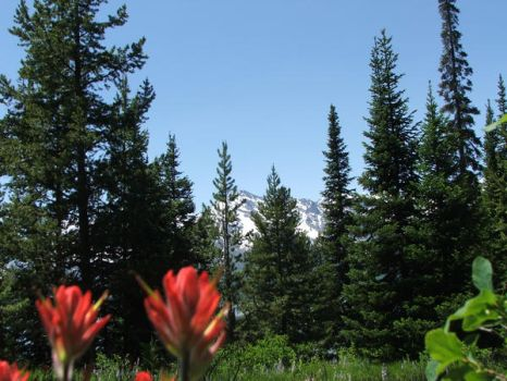 Forrest and mountains by Max-Devereaux