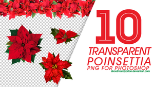 10 Transparent Poinsettia by AbouthRandyOrton