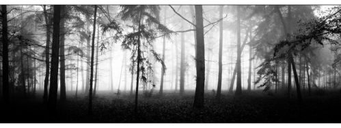 Between The Trees by Mxk9