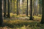 Forest Stock 40 by Sed-rah-Stock