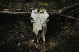 forest cow by collien