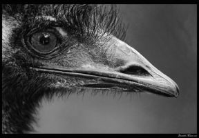 Emu Black and White by daniellepowell82