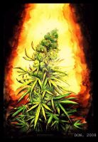 I sell Marijuana...paintings by MacDoninri