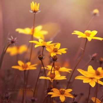 wild flowers by Cochalita