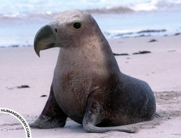 Sealgle by HumanDescent