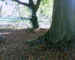Lacock Abbey grounds by RobynSmaleBeorg