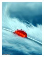 Red Drop by phykia