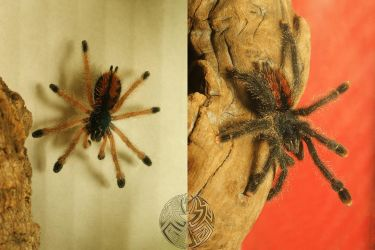before and after the molting by webcruiser