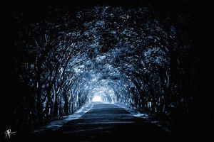TUNNEL OF TREES by amitrichard