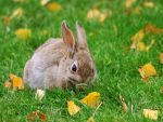 Autumn bunny by diamondie