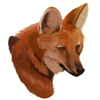 Maned Wolf - Speedpainting by SabrinaDeets