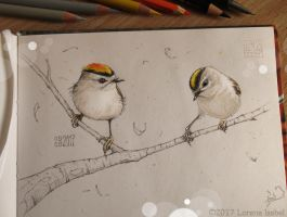 Golden-crowned Kinglet by Loisa