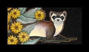Black Footed Ferret And Arrowleaf Balsamroot by Ravenari
