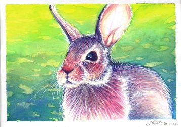 Colorful Rabbit | Animals and Nature by J-Ssi