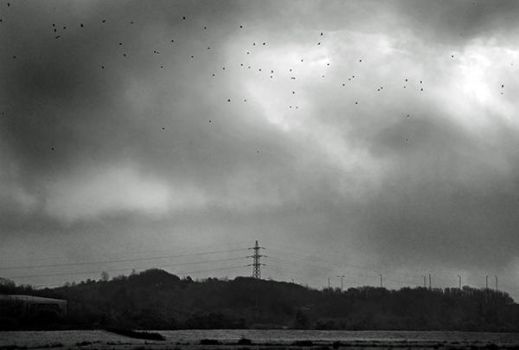 Crows 2253 by filmwaster