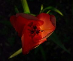 Flor by Malacantoche